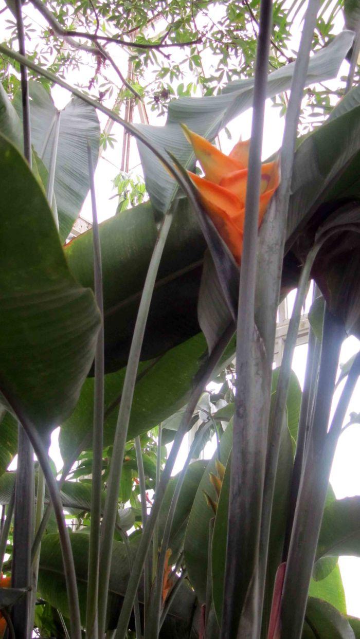 New_york_botanical_garden_5