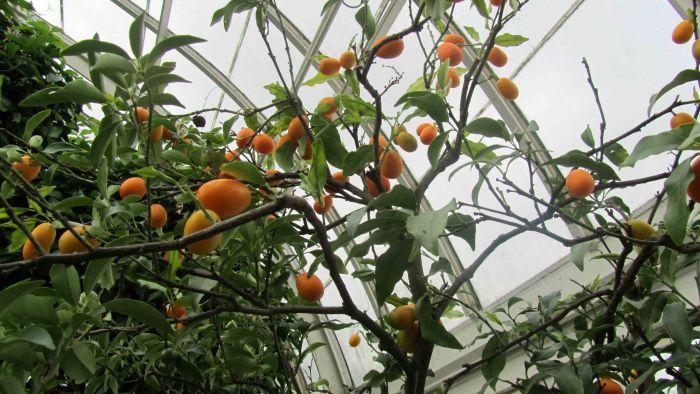 New_york_botanical_garden_20