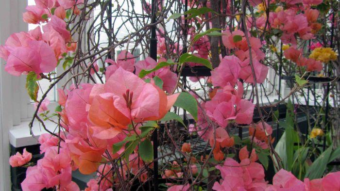 New_york_botanical_garden_21