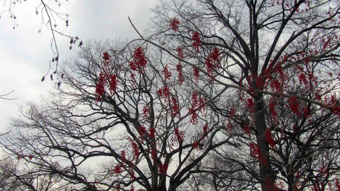 New_york_botanical_garden_29