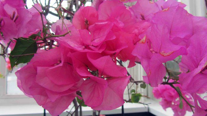 New_york_botanical_garden_24