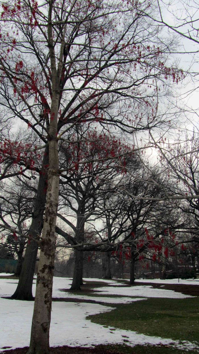 New_york_botanical_garden_32