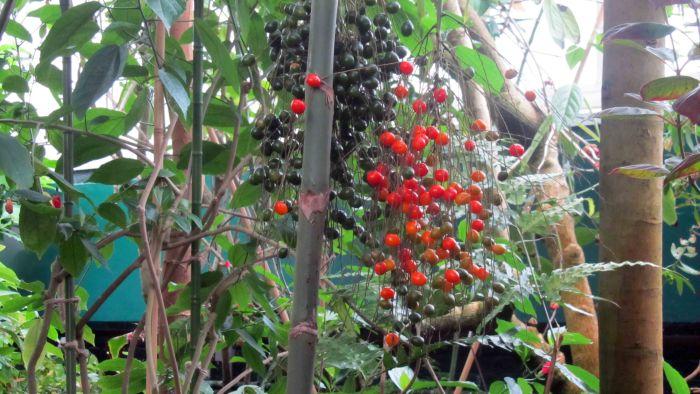 New_york_botanical_garden_17
