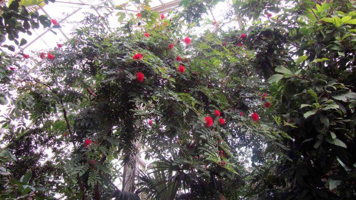 New_york_botanical_garden_19