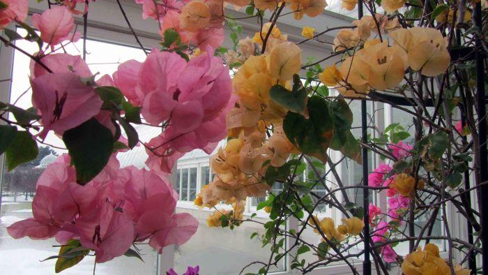 New_york_botanical_garden_23