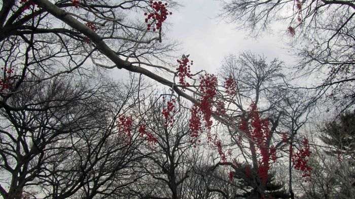 New_york_botanical_garden_30