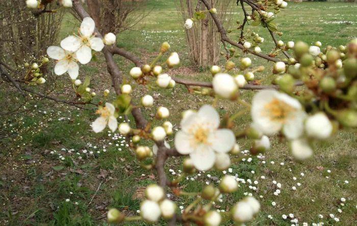 Silente_-_welcome_spring_2011_7